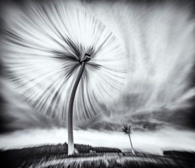 """""""El parque eólico Diente de León Turbo"""" (The Turbo Dandelion Wind Farm) de Derek Snee en Northumberland, UK. """"Imagina que pudiésemos usar las plantas para generar energía. Bueno, ahora ya podemos. Damas y caballeros, niños y niñas, os presento """"El parque eólico Diente de León Turbo"""""""