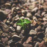 Materiales sostenibles para la construcción: pinturas, revestimientos y soluciones transparentes
