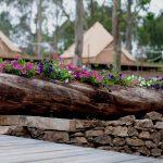 El camping autosuficiente de la Isla de Ons, ejemplo de turismo sostenible
