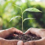 ¿Por qué especializarse en arquitectura sostenible?