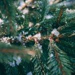 Claves para unas Navidades sostenibles