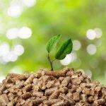 La biomasa: una fuente energética que utiliza materia orgánica