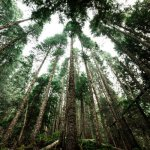 Life EcoTimberCell, un proyecto para reducir la huella ambiental en la construcción