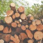¿Es realmente sostenible la biomasa?