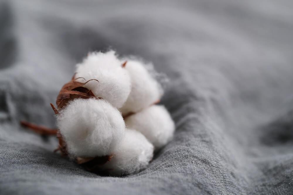 Cotton-flowers